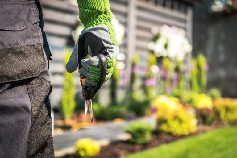 Spring Cleanup For The Backyard, Lawn, And Landscape
