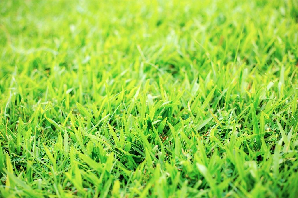healthy green lawn