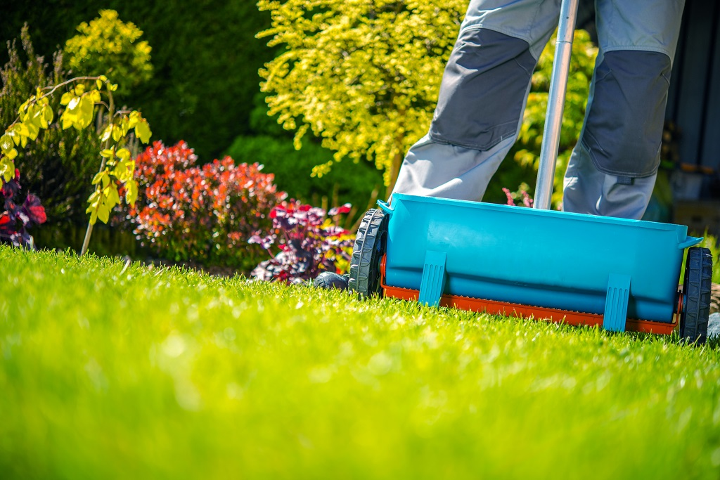 fertilizing grass with handheld tool