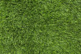 healthy-green-lawn
